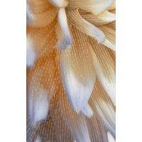 ФИОРИ 4 цветок 250х400 Декор : GoldenTile : mercado