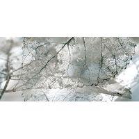 Magia серый 02 230х500 Декор : InterCerama (ИнтерКерама) : mercado